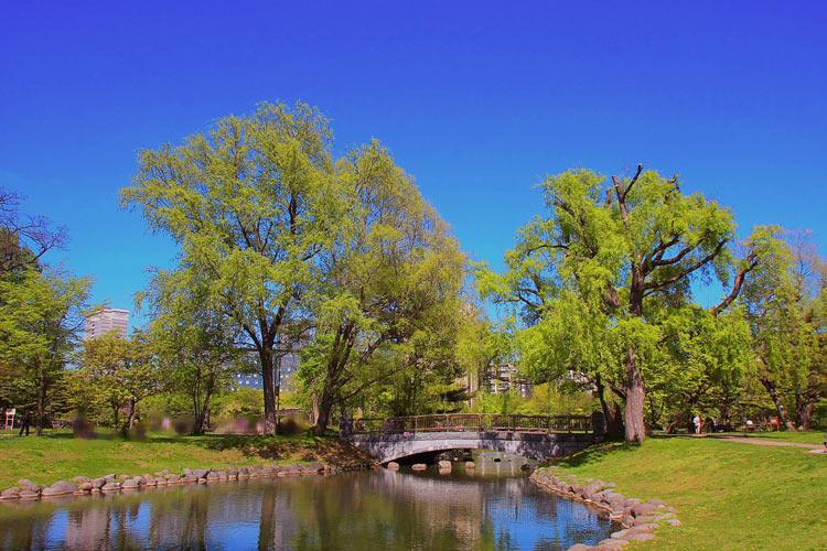 札幌市中島公園内の菖蒲池の写真。
